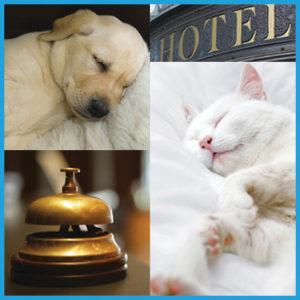 certificate-course-pet-hotel