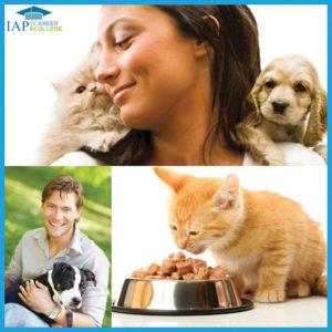 certificate-course-pet-sitter-online