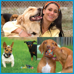 dog-daycare-certificate-course-online