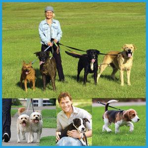dog-walker-certificate-course-online
