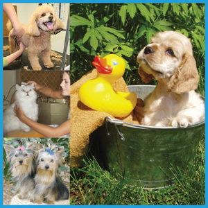 certificate-course-pet-spa