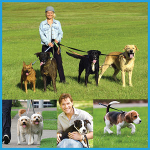 dog-walker-certificate-course-online